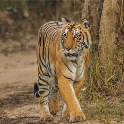 jungle safari in rishikesh