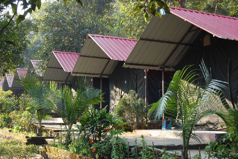 Luxury Forest Tent Stay